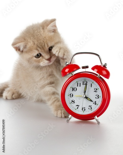 Obraz Kitten with Alarm Clock - fototapety do salonu