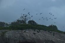 Ibis, Frigatebirds, Cormorants, Crows And Other Sea Birds On The Bird Island In Polonnaruwa, Sri Lanka