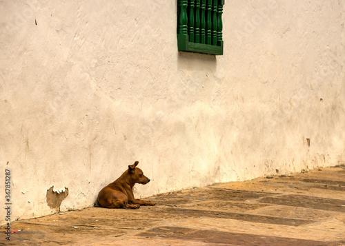 Valokuvatapetti perro en la pared