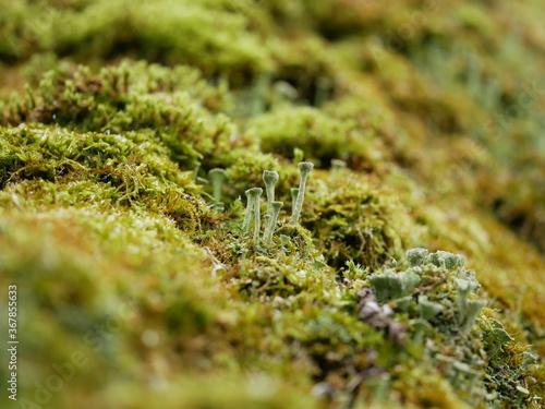 Photo Macrophotography of moss with bokeh effect
