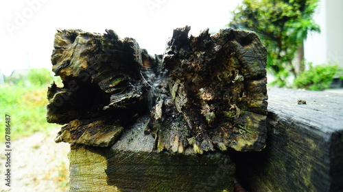 Fotografie, Obraz 腐った木材の断面