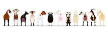Various Goats Border