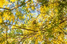 A Small Silvereye Bird Perched...