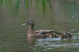 Fototapeta Zwierzęta - Rodzinka