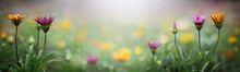 Yellow And Purple Flowers On A Blurred Background. Macro Shot. Very Shallow Focus. Summer And Spring Fantasy Flower Background. Wide Format, Free Space For Design. Floral Background Concept.