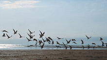Flying Birds Gulls Over The Sea Sand.Azov Sea