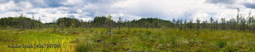 Fotografia View on swamp and blue sky in Russia