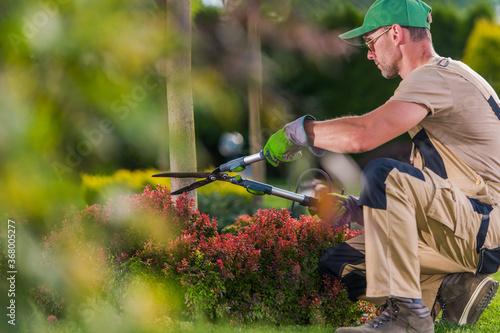 Obraz Garden Decorative Trees Trimming by Professional Gardener - fototapety do salonu