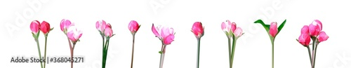 Photo Vector rose flowers isolated on white background