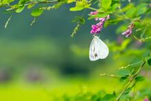 木の花にとまるモンシ...