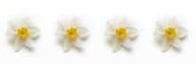 White Yellow Flower Daffodil N...