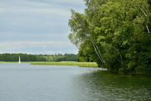 A View Of A Dense Forest Or Moor Growing Next To The Edge Of A Vast Yet Shallow River Or Lake Located Nearby Some Reeds With A Single White Boat Or Other Vessel Traversing The Reservoir In Summer