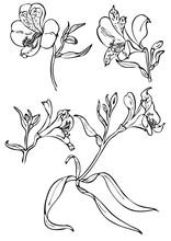 Set Of Floral Elements For Des...