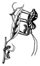 Wheel Bug, Vintage Illustration.