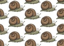 Realistic Snail Seamless Patte...