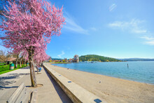 Colorful Trees Blossoming In The Spring Along The Sandy Shores Of Lake Coeur D'Alene In Coeur D'Alene, Idaho.