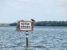 Manatees Danger Sign With Slow Down Speed Minimum Wake And Osprey Or Fish Hawk (Pandion Haliaetus) Sitting On Signpost USA, Florida, Everglades National Park