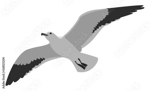 Flying albatross, illustration, vector on white background Fototapeta