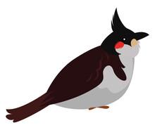 Cute Bulbul Bird, Illustration, Vector On White Background