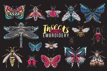 Dragonfly, Ant, Fly, Night Mot...