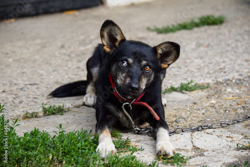 Fotografia, Obraz Cute little dog with interesting eyes who is playfull