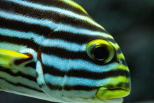 The Eyes Of Various Fishes In ...