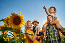 Young Family In A Sunflower Fi...