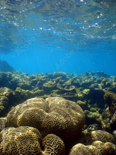 Canvas underwater coral reef fish ocean caribbean sea Venezuela