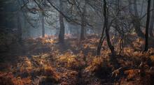 Heath Warren Wood Hampshire, C...