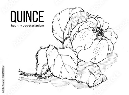 Sprig of ripe quince on white background Fototapet
