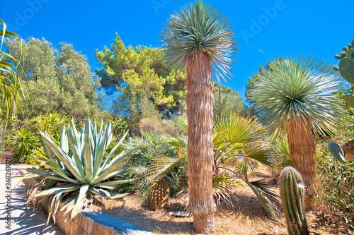 Palmizana on Pakleni Otoci islands mediterranean botanical garden view Canvas Print