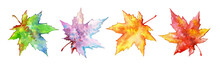 Set Of Colorful Maple Leaves. ...