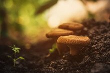 Mushrooms In The Ground. Magic...