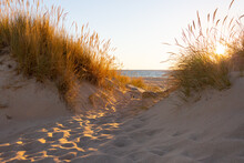 Looking Through Dune Grasses On Sand Dune To The Ocean