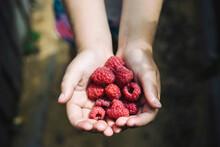 Fresh Raspberries In Childs Ha...