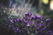 Purple Flowers Up Close