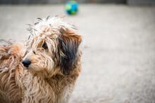 Scruffy Pup Looking Sideways.