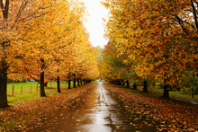 Street Lined With Autumn Trees