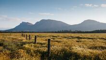 Flinders Ranges Landscape With...