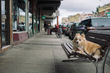 Small Dog On Street Bench Waiting For Owner