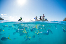 A Split Shot Of Snorkelers Swi...