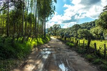 Dirt Road With Puddles Surroun...