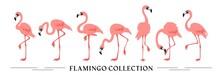 Flamingo Collection - Vector I...