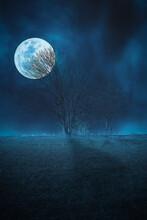 Full Moon Over The Tree