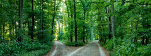 Two Paths In A Forest That Sep...