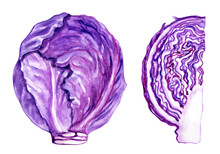 Scotch Kale Or Red Cabbage, Whole Head Of Cabbage And Cutaway, Watercolor Illustration On A White Background, The Image Of Vegetables For A Culinary, Botanical Book, Menu And Other Designs.