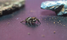 Spider On The Ground