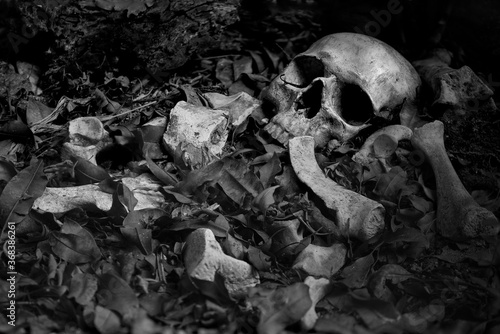 The skull and pile of bone on decay leaf in pit the old graveyard whith has dim Wallpaper Mural