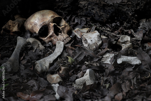 Slika na platnu The skull and pile of bone on decay leaf in pit the old graveyard whith has dim