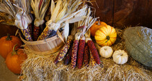 Colorful Indian Corn And Colorful Pumpkins Decoration On Hay